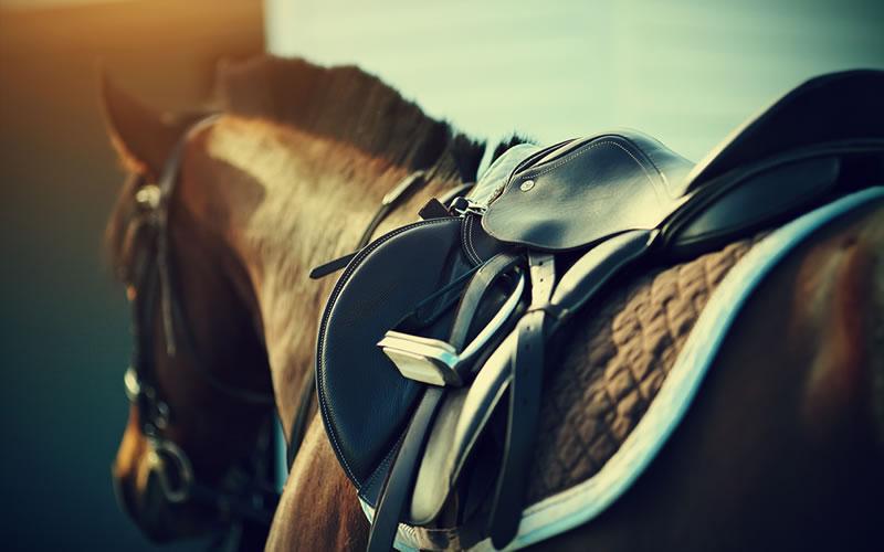 Pferde Tierarzt